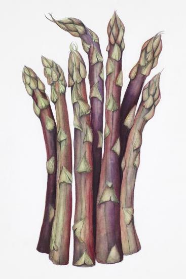 Asparagus-Deborah Kopka-Giclee Print