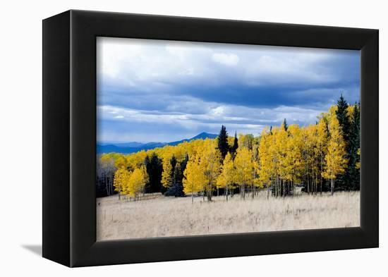 Aspen and Pines-Peter Milota Jr-Framed Premier Image Canvas