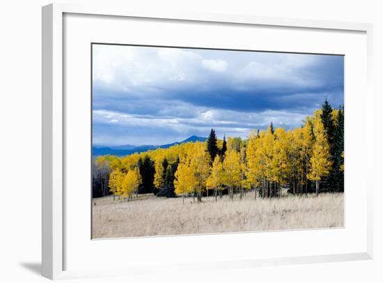 Aspen and Pines-Peter Milota Jr-Framed Photographic Print