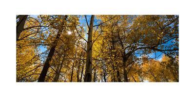 Aspen Autumn-Steve Gadomski-Photographic Print