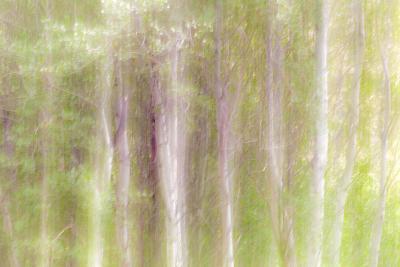 Aspen Blur III-Kathy Mahan-Photographic Print