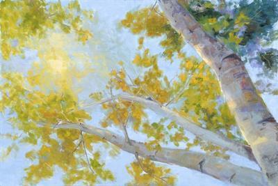 https://imgc.artprintimages.com/img/print/aspen-canopy_u-l-q11au1r0.jpg?p=0