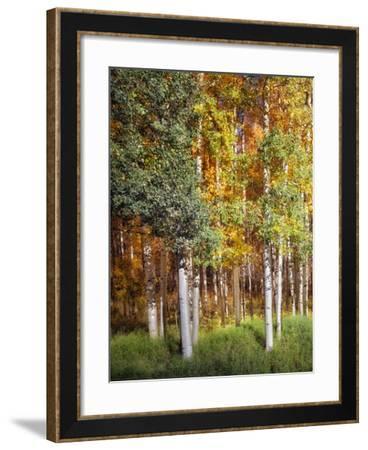 Aspen Glen I-David Drost-Framed Photographic Print