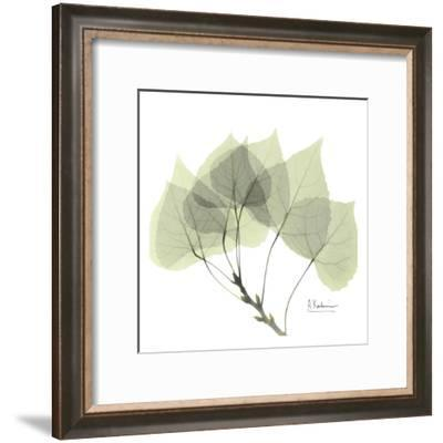 Aspen in Green-Albert Koetsier-Framed Art Print