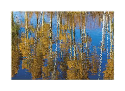 Aspen Reflection-Don Paulson-Giclee Print