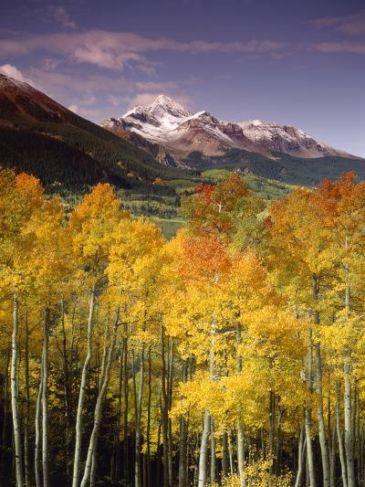 Aspen Tree, Snowcapped Mountain, San Juan National Forest, Colorado, USA-Stuart Westmorland-Photographic Print