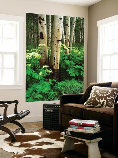 Aspen Trees and Cow Parsnip in White River National Forest, Colorado, USA-Adam Jones-Wall Mural