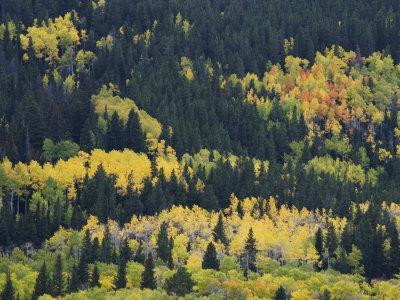 https://imgc.artprintimages.com/img/print/aspen-trees-endovalley-rocky-mountain-national-park-colorado-usa_u-l-p86odk0.jpg?p=0