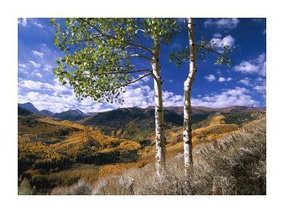 Aspen trees in fall-colors on Elk Mountains, Capitol Creek trailhead, Colorado-Tim Fitzharris-Art Print