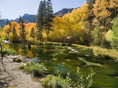 Aspen Trees Lining the Shallow Bed of a Mountain Stream-James Forte-Photographic Print