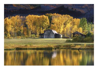 Aspen Trees with Barn-Jamie Cook-Premium Photographic Print