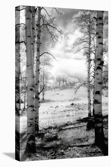 Aspen Vista-Scott Peck-Stretched Canvas Print