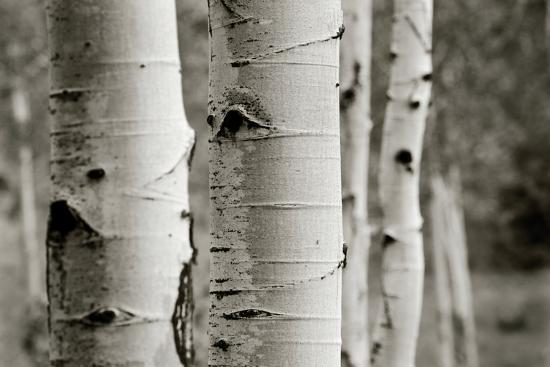 Aspens III-Debra Van Swearingen-Photo
