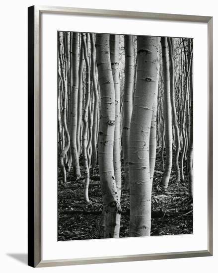 Aspens, Utah, 1972-Brett Weston-Framed Photographic Print