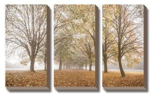 Autumn's Peace by Assaf Frank