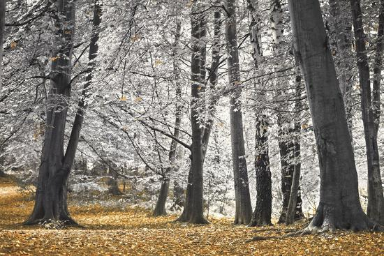 assaf-frank-autumn-tress-and-leaves