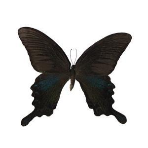 Butterfly Noir by Assaf Frank