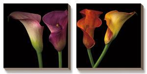 Jewel Calla Lilies by Assaf Frank
