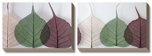 Leafy Address by Assaf Frank