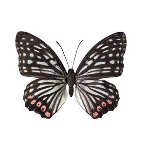 Monochrome Wings by Assaf Frank