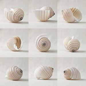 Seashell Chorus by Assaf Frank