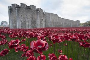Ceramic poppies at the Tower of London by Associated Newspapers