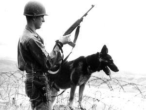 Dogs in Vietnam by Associated Press