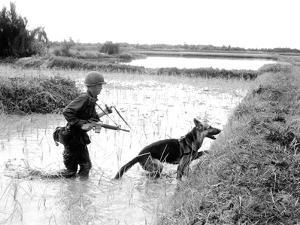Dogs in Vietnam by Associated Press