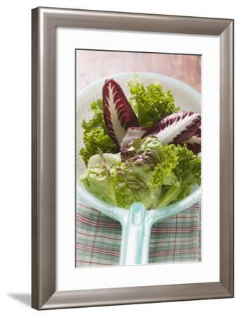 Assorted Salad Leaves in Plastic Strainer-Foodcollection-Framed Photographic Print