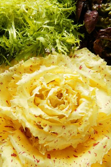 Assorted Salad Leaves with Yellow Radicchio-Foodcollection-Photographic Print