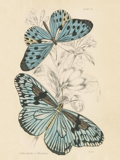 Assortment Butterflies II-Wild Apple Portfolio-Art Print