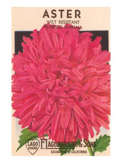 Aster Seed Packet--Art Print
