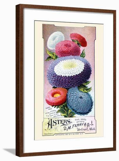 Asters--Framed Art Print