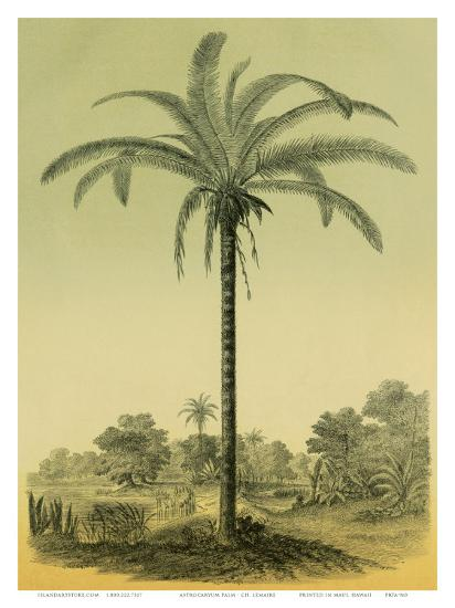 Astrocaryum Chambira Palm Tree, Botanical Illustration, c.1854-Ch^ Lemaire-Art Print