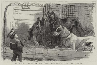 At a Dog Show, the Big Danes and the Little Englishman--Giclee Print