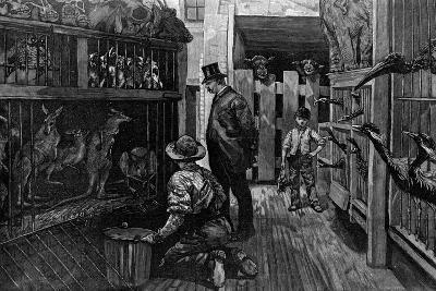 At Jamrach'S, London, 1887--Giclee Print