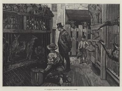 At Jamrach'S, the Dealer in Wild Animals, East London--Giclee Print