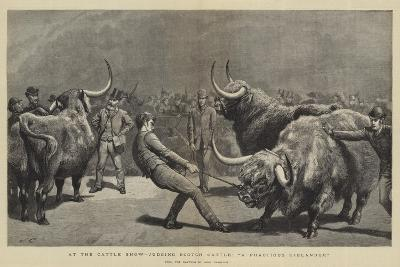 At the Cattle Show, Judging Scotch Cattle, A Fractious Hielander-John Charlton-Giclee Print