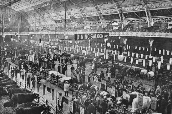 At the Smithfield Club cattle show, Agricultural Hall, Islington, London, 1902-Unknown-Photographic Print