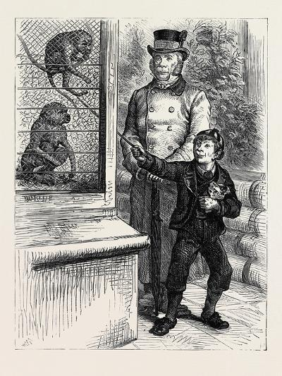 At the Zoological Society's Gardens in London: the Monkeys 1880--Giclee Print