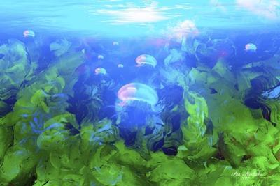 Jelly Fish by Ata Alishahi