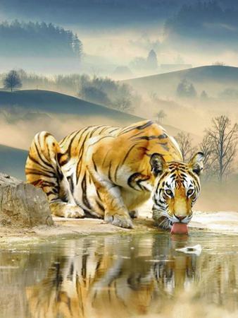 Tiger Drinking Water by Ata Alishahi