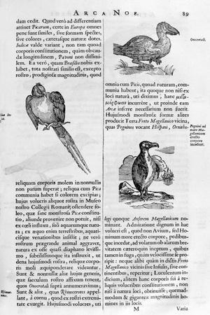Birds, 1675