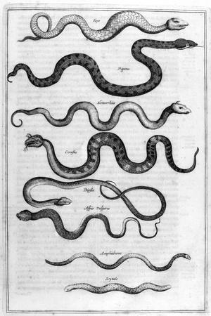 Serpents, 1675