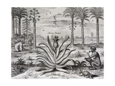 Athanasius Kircher-Athanasius Kircher-Giclee Print