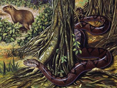 Atlantic Bushmaster (Lachesis Mutus), Viperidae--Giclee Print