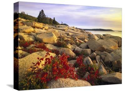 Atlantic coast near Thunder Hole, Acadia National Park, Maine-Tim Fitzharris-Stretched Canvas Print