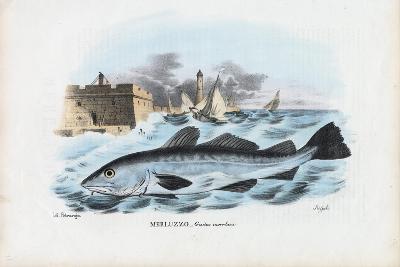 Atlantic Cod, 1863-79-Raimundo Petraroja-Giclee Print