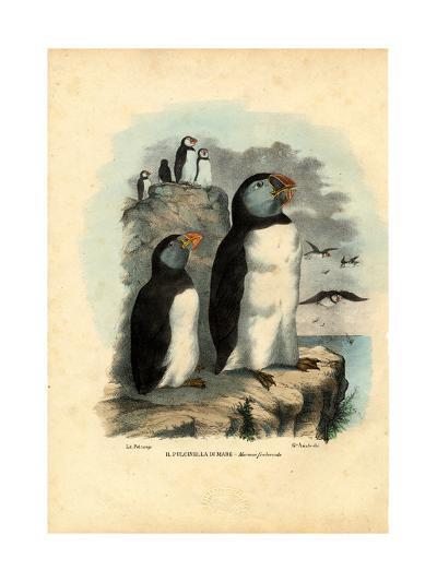 Atlantic Puffin, 1863-79-Raimundo Petraroja-Giclee Print