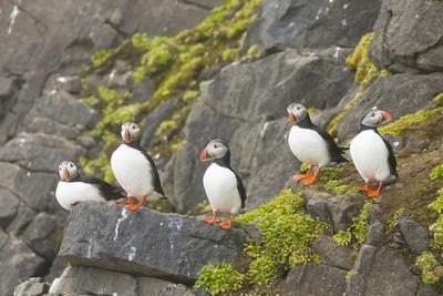 https://imgc.artprintimages.com/img/print/atlantic-puffin-perched-on-a-cliff-spitsbergen-svalbard-norway_u-l-pn5j4l0.jpg?p=0